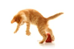 Small playful kitty Stock Photos