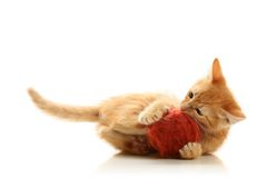 Small playful kitty Royalty Free Stock Photos