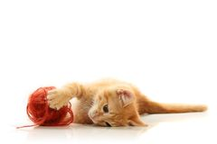 Small playful kitty Stock Image