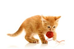 Small playful kitty Royalty Free Stock Photo