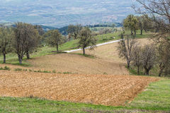 Small plowed fields in the countryside. Royalty Free Stock Images