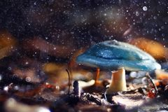 Small poisonous mushroom Royalty Free Stock Photos