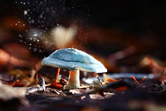 Small poisonous mushroom Stock Photography