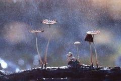 Small poisonous mushrooms Stock Photos