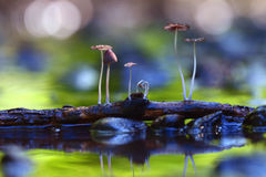 Small  poisonous mushrooms Stock Images