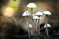Small poisonous mushrooms unusual Royalty Free Stock Images