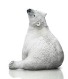Small polar bear cub Stock Photos