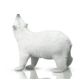 Small polar bear. Cub is  on white background Royalty Free Stock Images