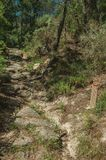 Small pole next to trail on rocky terrain covered by trees. Small pole next to dirt trail to mark the right path through rocky terrain covered by trees, at the royalty free stock photography