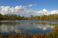 Small pond. A view of a farm pond Royalty Free Stock Photo
