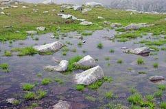 Small pond Stock Image