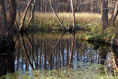Small pond Royalty Free Stock Image