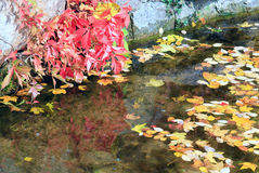 Small pond in autumn city park Royalty Free Stock Images