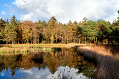 Small pond in autumn forest Stock Photos