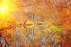 Small pond in the autumn park at sunset instagram stile Royalty Free Stock Photos