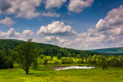 Small pond at Canaan Valley State Park, West Virginia. Stock Images