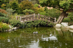 A small pond and a decorative wooden bridge Royalty Free Stock Image