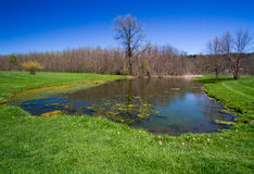Small pond. A small pond on an early spring day Royalty Free Stock Images