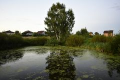 A small pond on the edge of the village. Summer pond grass cloudless sky. One storey house stock images