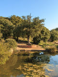 The small pond at the foot of a large tree.  royalty free stock photo