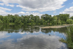 A small pond in Hampstead Heath, London, UK Royalty Free Stock Image