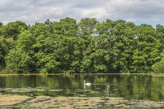 A small pond in Hampstead Heath, London, UK Stock Photography