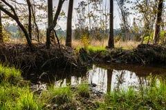 Small pond in Lagoas de Bertiandos Stock Photo