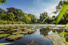 Small Pond with lily pads Royalty Free Stock Photos