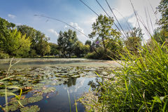Small Pond with lily pads Stock Images