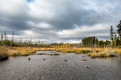Small Pond in the Maine North Woods. On overcast fall day Stock Photo