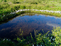 Small pond near Thingvallavatn Lake in Iceland Stock Photo