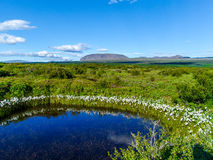 Small pond near Thingvallavatn Lake in Iceland - 2 Royalty Free Stock Image