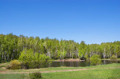 Small pond in park. Small pond on the bank of a birchwood. The pure blue sky royalty free stock photo