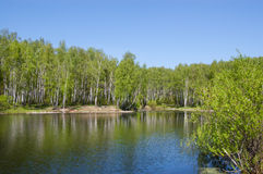 Small pond in park. Small pond on the bank of a birchwood. The pure blue sky royalty free stock photography