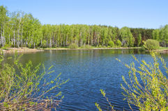 Small pond in park. Small pond on the bank of a birchwood. The pure blue sky royalty free stock photos