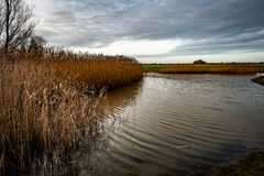 Small pond and reed bed Stock Photography