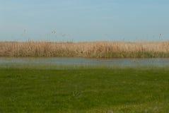 Small pond Royalty Free Stock Photo