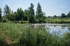 Small pond in the Russian village along the road. Small pond in the Russian village, Udmurtia around high trees Stock Photos