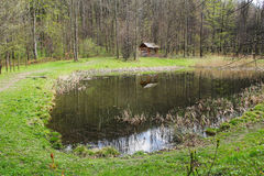 Small pond Stock Photography