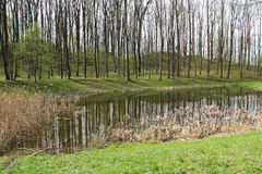 Small pond at Sostyn Stock Images