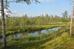 Small pond among the summer taiga. Stock Photography