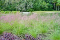 A small pond in Tampa palm community. A small pond in Tampa plam community, taken in Tampa royalty free stock photo