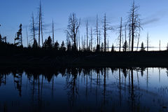 Small pond and tree silhouette Royalty Free Stock Photos