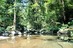 Small pond in the tropical jungle . Palawan Island . Stock Images