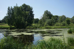 Small pond in the village. Small pond in the Russian village, Udmurtia around high trees Stock Photos