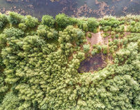 Small pond in the wood. Aerial photo with the drone royalty free stock photos