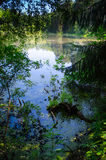 Small pond in the woods Royalty Free Stock Photography