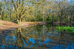 Small pond in the woods in the springtime Royalty Free Stock Image