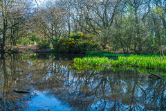 Small pond in the woods in the springtime Stock Photography