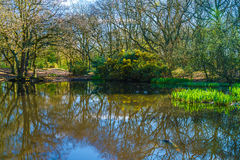 Small pond in the woods in the springtime Stock Photos